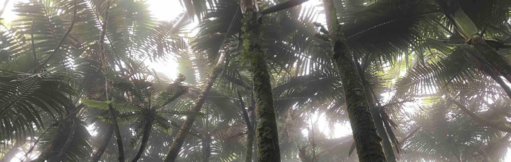 Big data saves the rainforest thecarreraagency.com